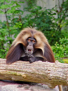 What catching monkeys can teach you about real estate investing
